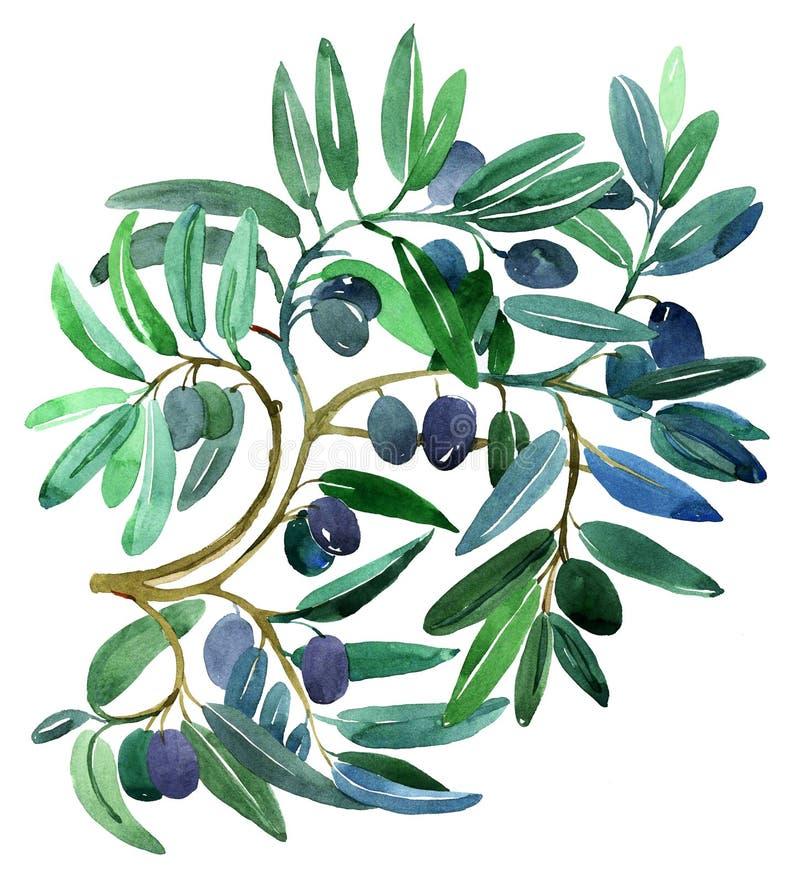rozgałęzia się oliwki ilustracji