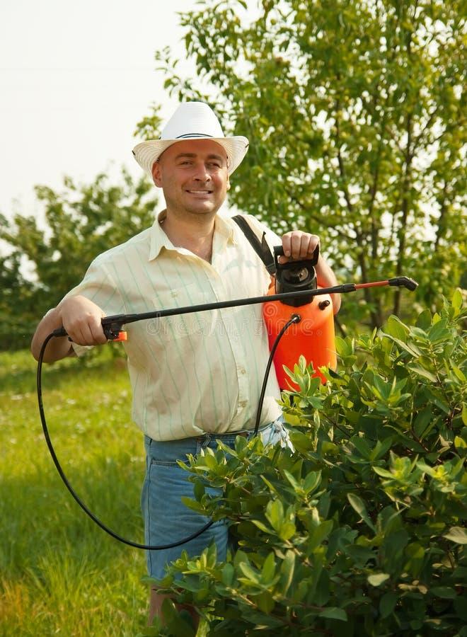 rozgałęzia się opryskiwania męskiego drzewa zdjęcie stock