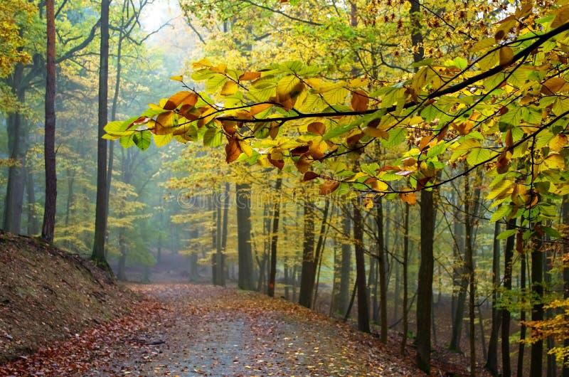 Rozgałęzia się przez drogę w jesień lesie fotografia stock