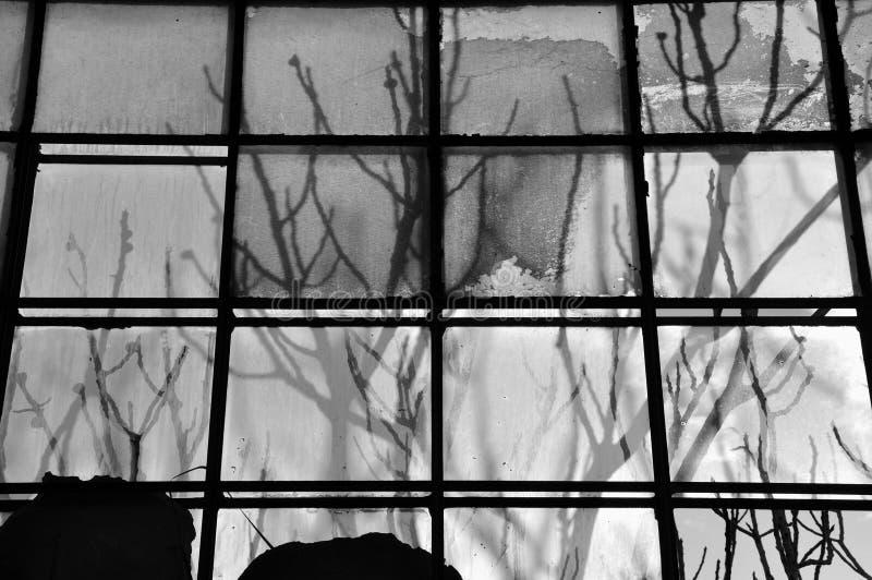 rozgałęzia się szkło plamiącego zdjęcia stock