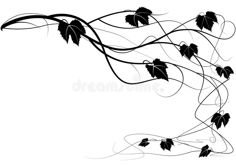 rozgałęzia się winogradu ilustracja wektor