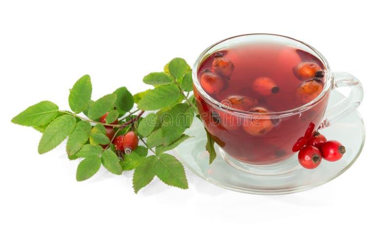 Rozgałęzia się z jagody różanej i filiżanki dziką herbatą odizolowywającą obraz stock