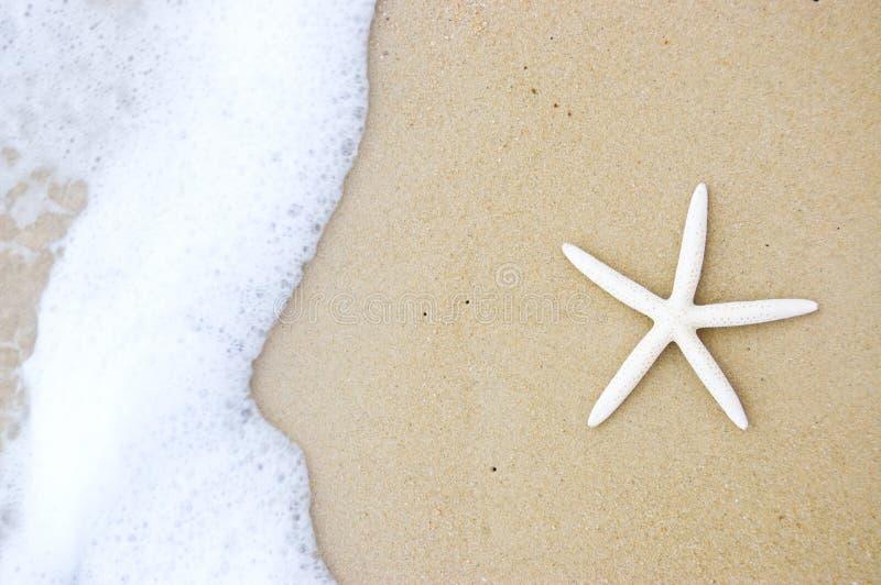 Download Rozgwiazda obraz stock. Obraz złożonej z plaża, scena - 13326691