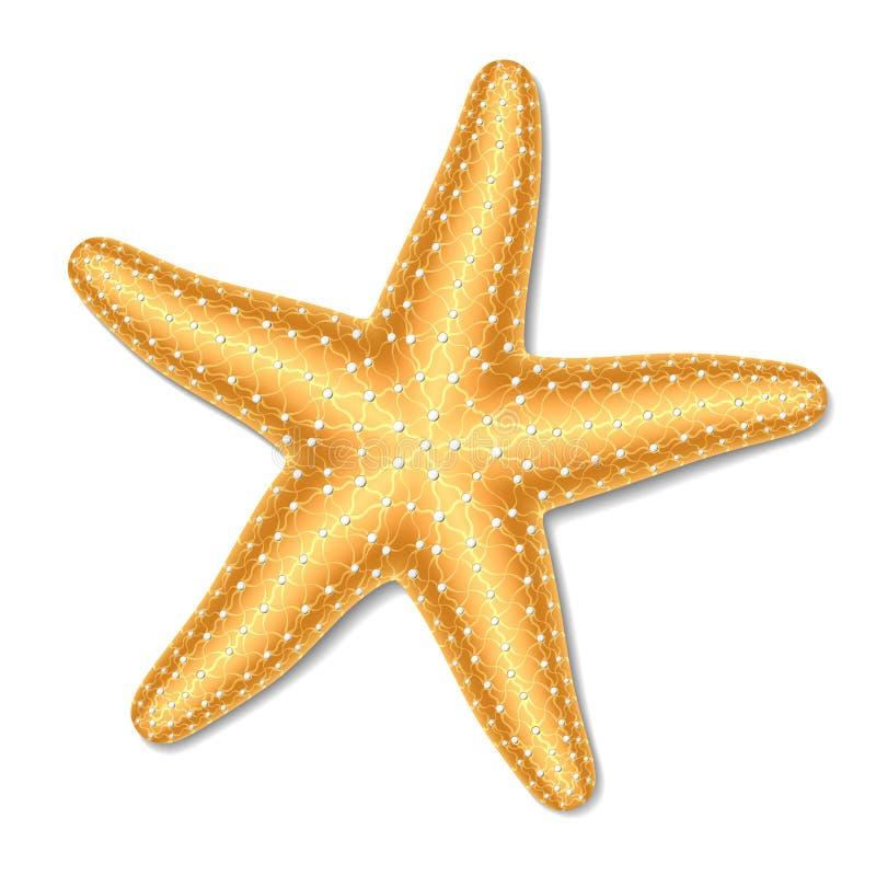 rozgwiazda ilustracji
