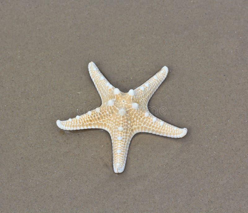 Download Rozgwiazda zdjęcie stock. Obraz złożonej z życie, wyznaczający - 41950318