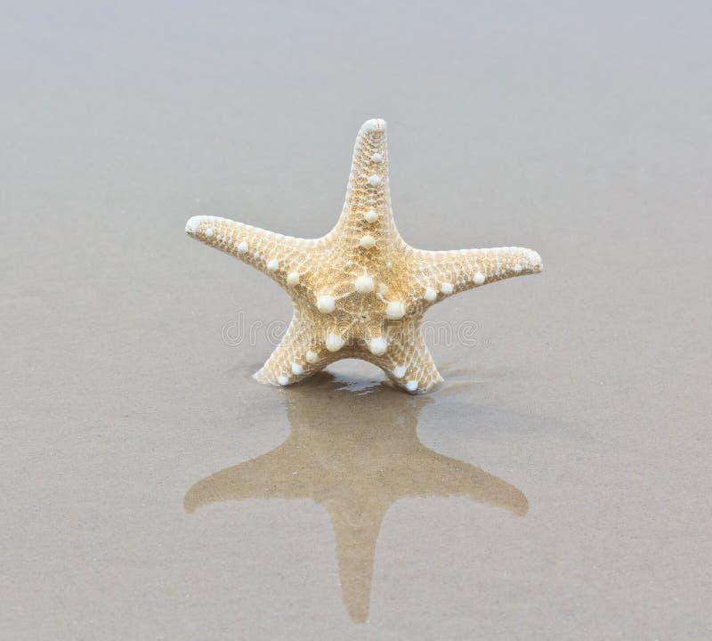 Download Rozgwiazda zdjęcie stock. Obraz złożonej z wybrzeże, jaskrawy - 41950328