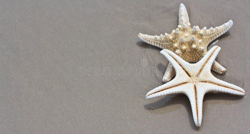 Download Rozgwiazda obraz stock. Obraz złożonej z kurort, ocean - 41952399