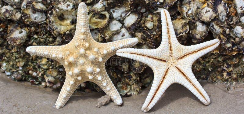 Download Rozgwiazda zdjęcie stock. Obraz złożonej z życie, wybrzeże - 41952424