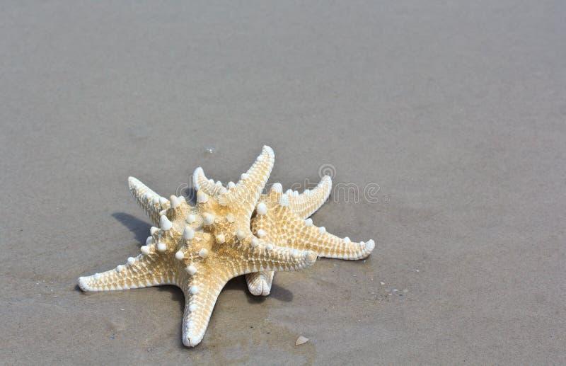 Download Rozgwiazda zdjęcie stock. Obraz złożonej z jeden, żeglarz - 41952502