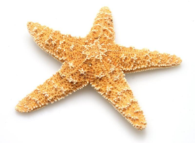 rozgwiazda zdjęcia stock
