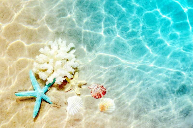 Rozgwiazda i seashell na lecie wyrzucać na brzeg w wodzie morskiej Lata tło młodzi dorośli zdjęcie royalty free