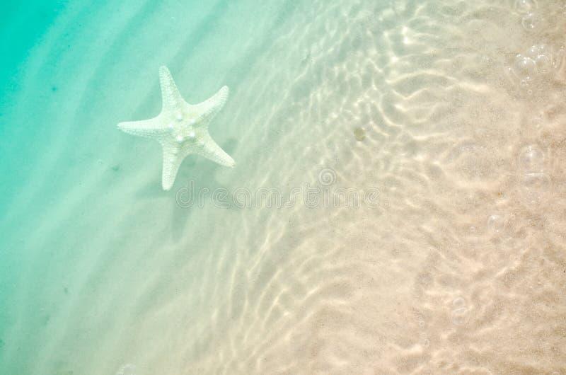 Rozgwiazda na lato plaży z piaskiem fotografia royalty free