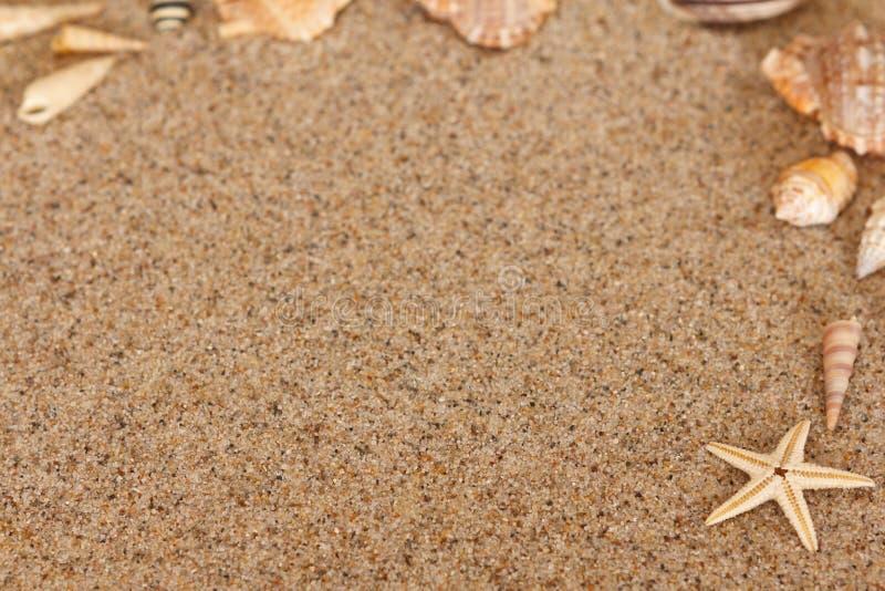 Rozgwiazda piaska konchy kopii przestrzeń fotografia stock