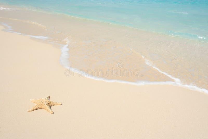 rozgwiazda plażowa obrazy stock