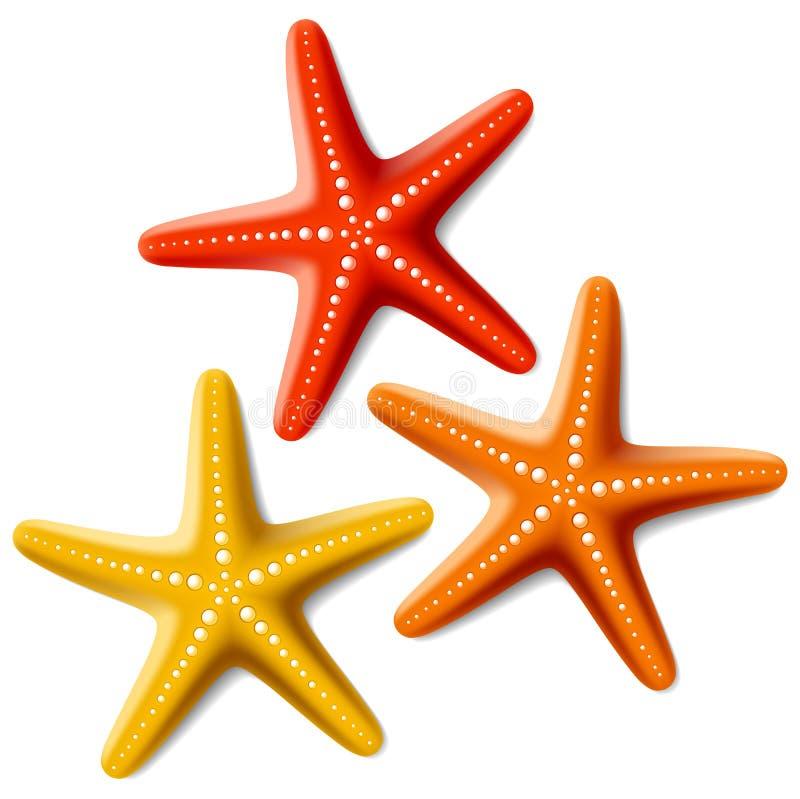rozgwiazdy ilustracja wektor