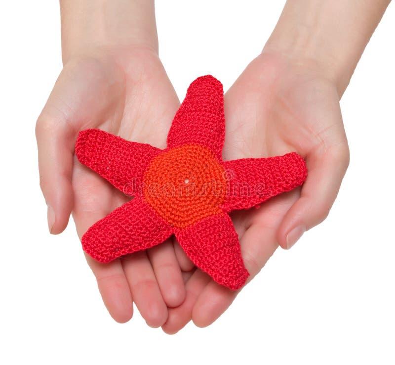 rozgwiazdy czerwona zabawka fotografia stock