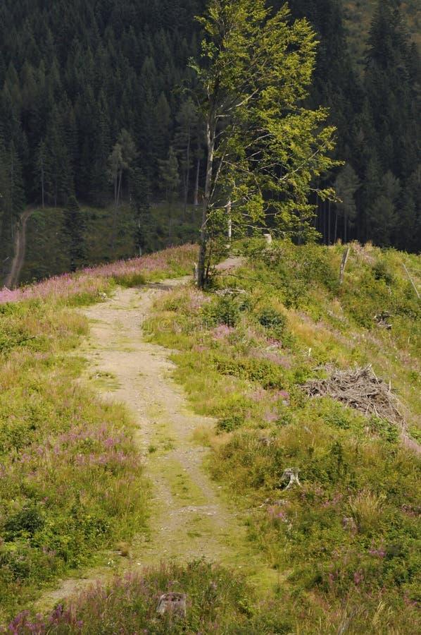 Rozjaśniać w Tatrzańskich górach obraz stock