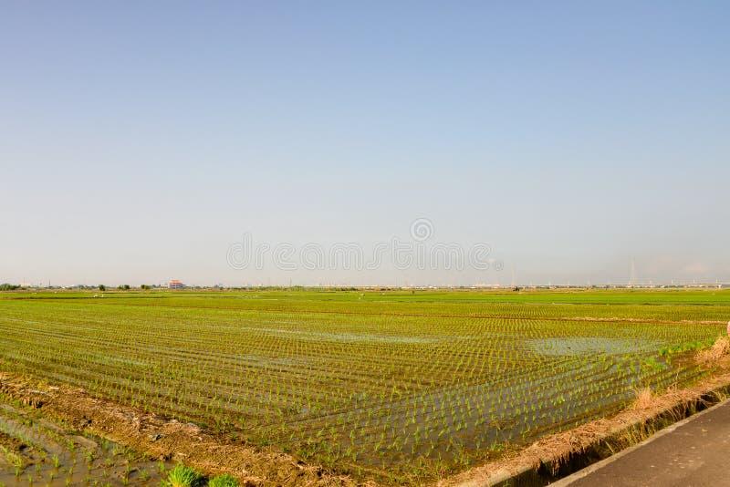 Rozlegli ryżowi pola w popierają ściennego teren Tainan miasto obraz stock