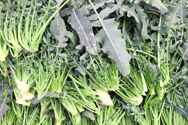 rozmaitość brokuły dzwonił BROCCOLO FIOLARO w Włoskim typowym o zdjęcie royalty free