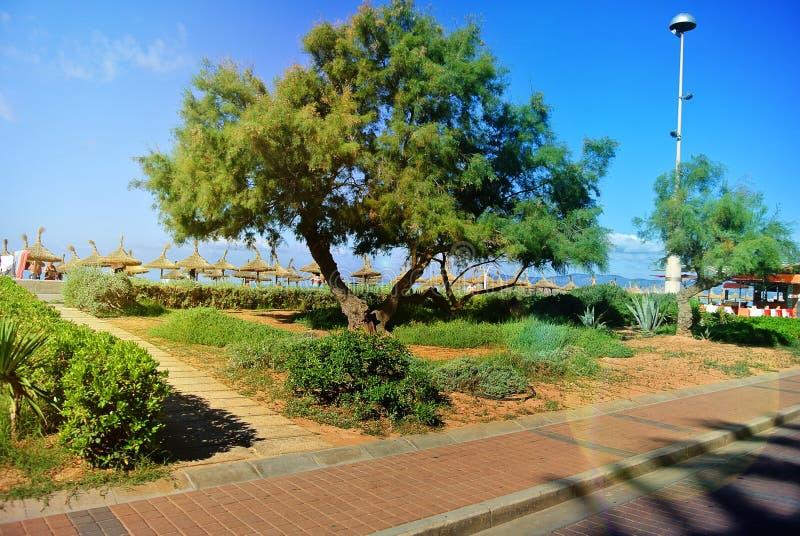Rozmaitość flory wybrzeże Catalonia Hiszpania zdjęcia royalty free