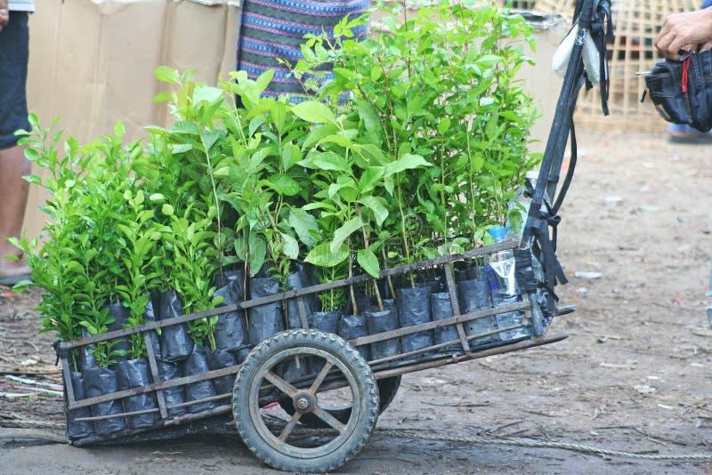 Rozmaitość młodej rośliny dorośnięcie w pepinierze zdosą przy miejscowego rynkiem fotografia stock
