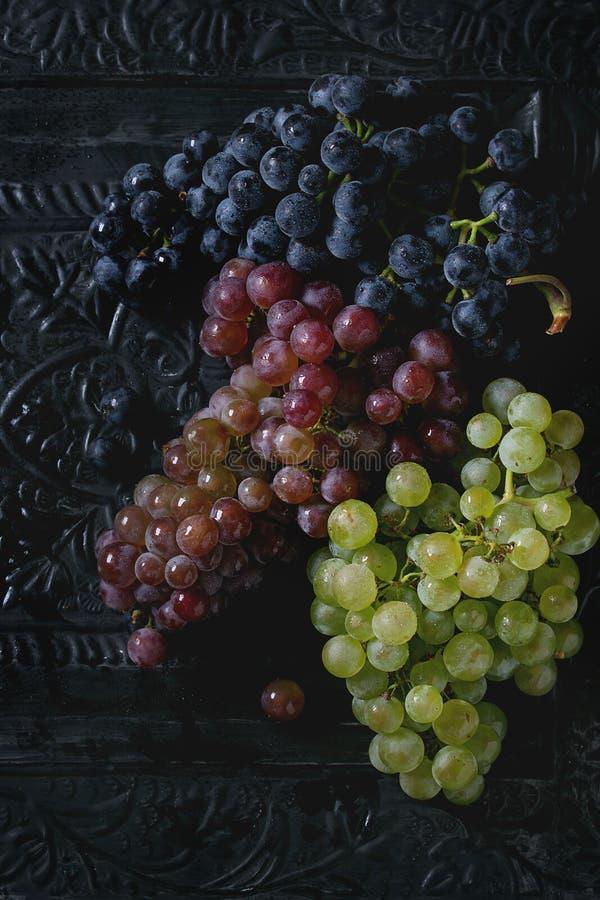 Rozmaitość winogrona zdjęcia stock