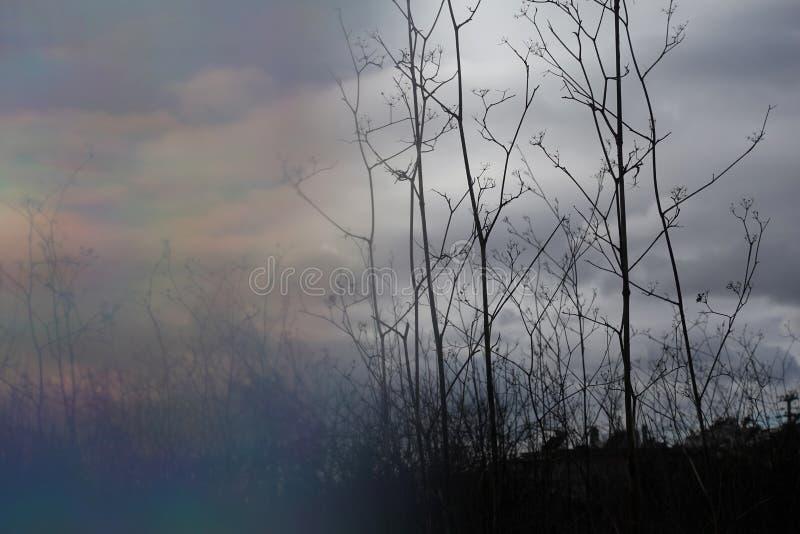 Rozmycie dzikich roślin kopru zdjęcie stock