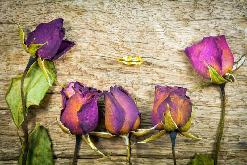 Rozmyte Suche róże na drewnianej teksturze, Sucha miłość w valentine, wybrana ostrość zdjęcia royalty free