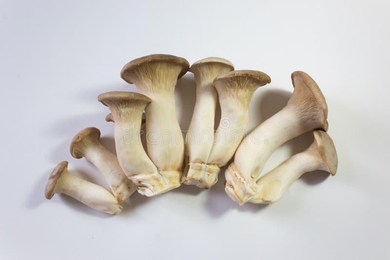 Rozniecony pokaz Pleurotus eryngii królewiątka trąbka ono Rozrasta się, ześrodkowywał, odizolowywał na bielu, fotografia stock