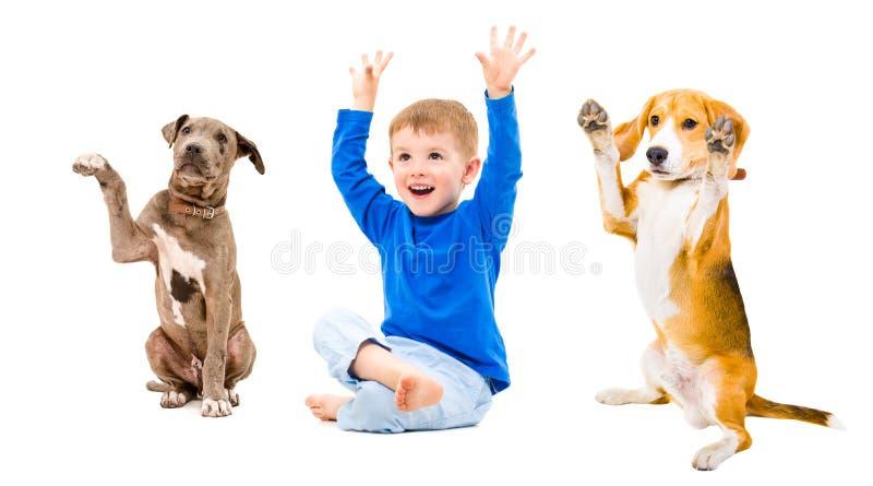 Rozochocona chłopiec i dwa psa siedzi wraz z rękami podnosić fotografia stock