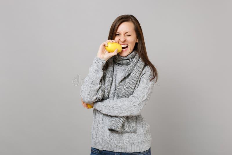 Rozochocona młoda kobieta w szarym pulowerze, szalika mruganie, zjadliwa cytryna odizolowywająca na popielatym tle w studiu Zdrow obrazy royalty free