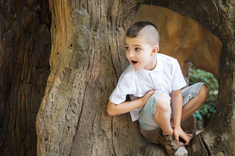 Rozochocony chłopiec obsiadanie w drzewie obraz royalty free