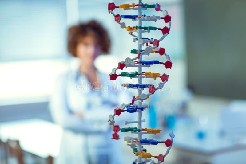 Rozochocony młody naukowiec patrzeje dużego bielu modela DNA zdjęcia stock