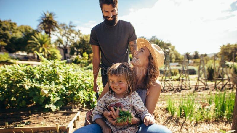 Rozochocony rodzinny bawić się z wheelbarrow przy gospodarstwem rolnym zdjęcia stock