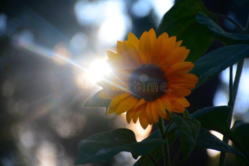 Rozpoczęcie słońce zdjęcia stock