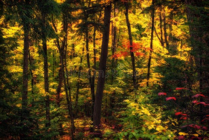 Rozprzestrzeniający jesień las zdjęcia royalty free