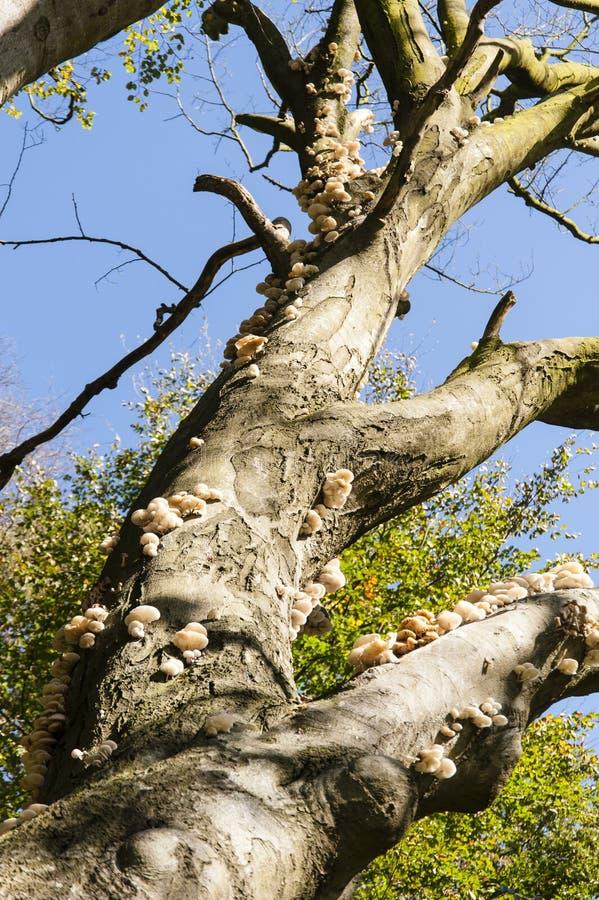 rozrasta się drzewa zdjęcie royalty free