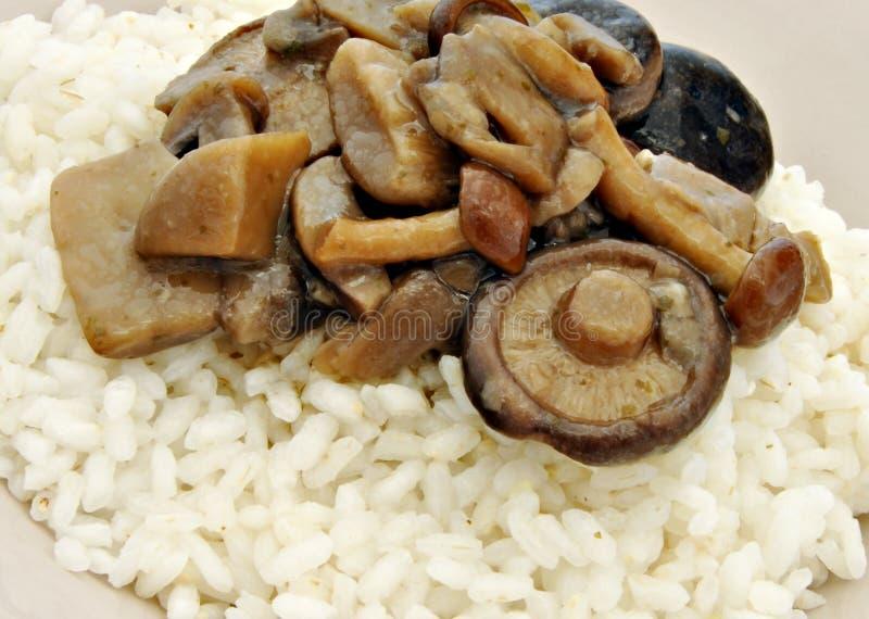 rozrasta się ryż zdjęcia stock