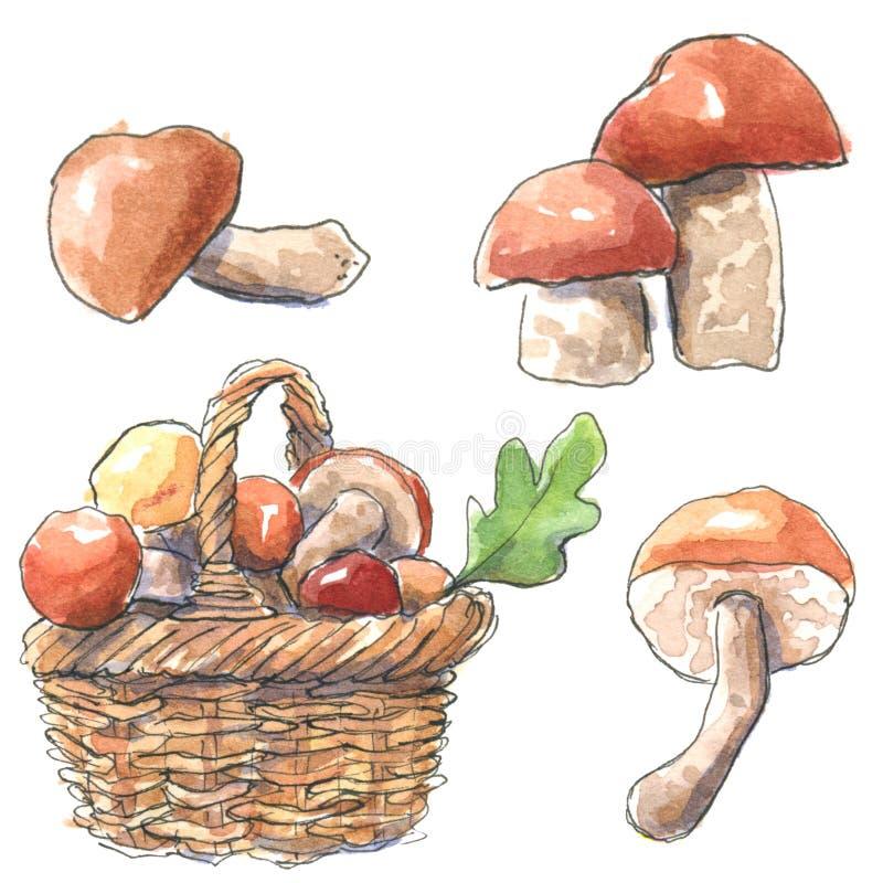 Rozrasta się ustalonego borowika edulis i Leccinum aurantiacum w koszu, ręka rysująca akwareli ilustracja ilustracji