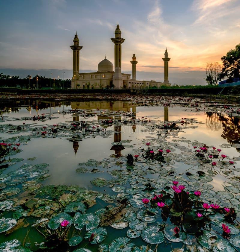 Rozrzucony Lotus zdjęcie stock