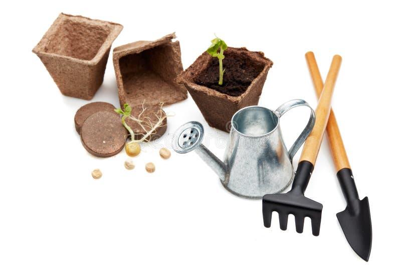 Rozsady i ogrodnictw narzędzia zdjęcie royalty free