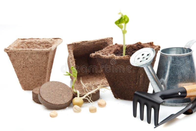 Rozsady i ogrodnictw narzędzia obrazy royalty free