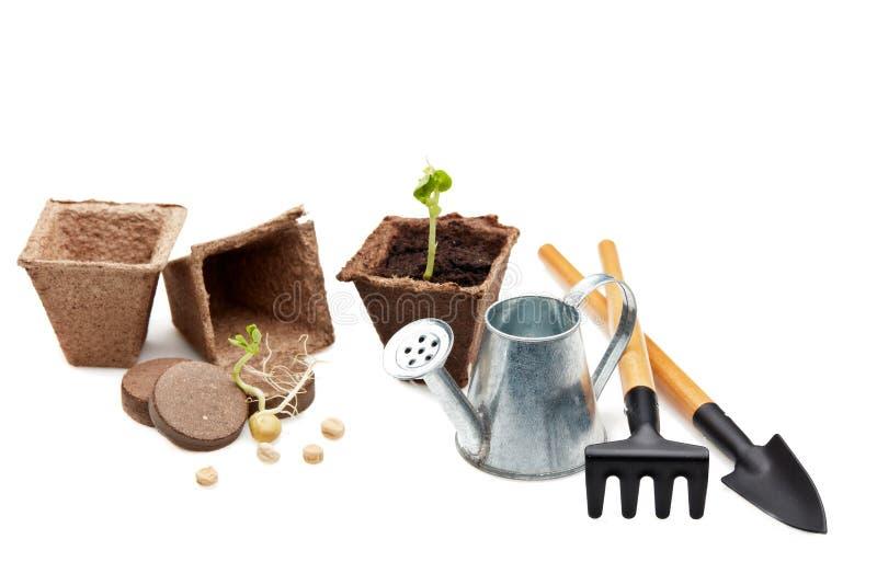 Rozsady i ogrodnictw narzędzia zdjęcia royalty free