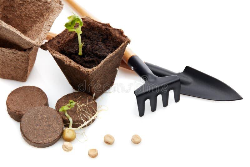 Rozsady i ogrodnictw narzędzia fotografia stock
