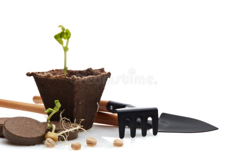 Rozsady i ogrodnictw narzędzia zdjęcia stock