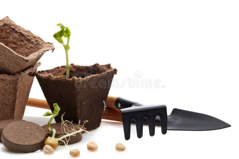Rozsady i ogrodnictw narzędzia obraz royalty free