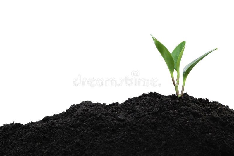 Rozsady i rośliny dorośnięcie w ziemi odizolowywającej na białej przestrzeni dla wszywka teksta obraz stock
