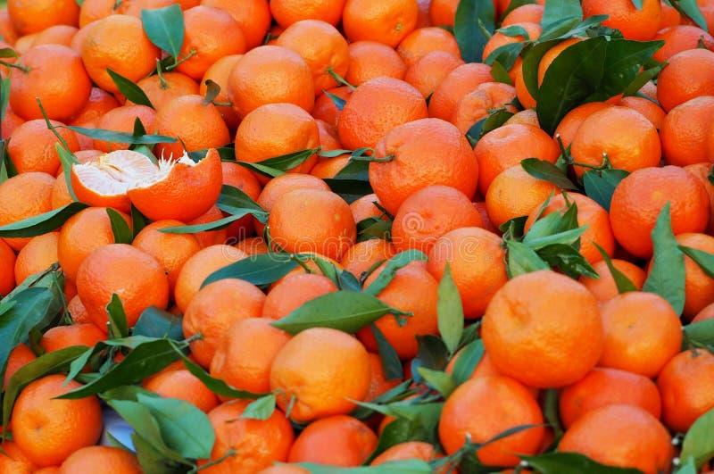 Rozsypisko clementines, hybryd między mandarynką i słodką pomarańcze właśnie podnoszącymi, knedle tła jedzenie mięsa bardzo wiele zdjęcie stock