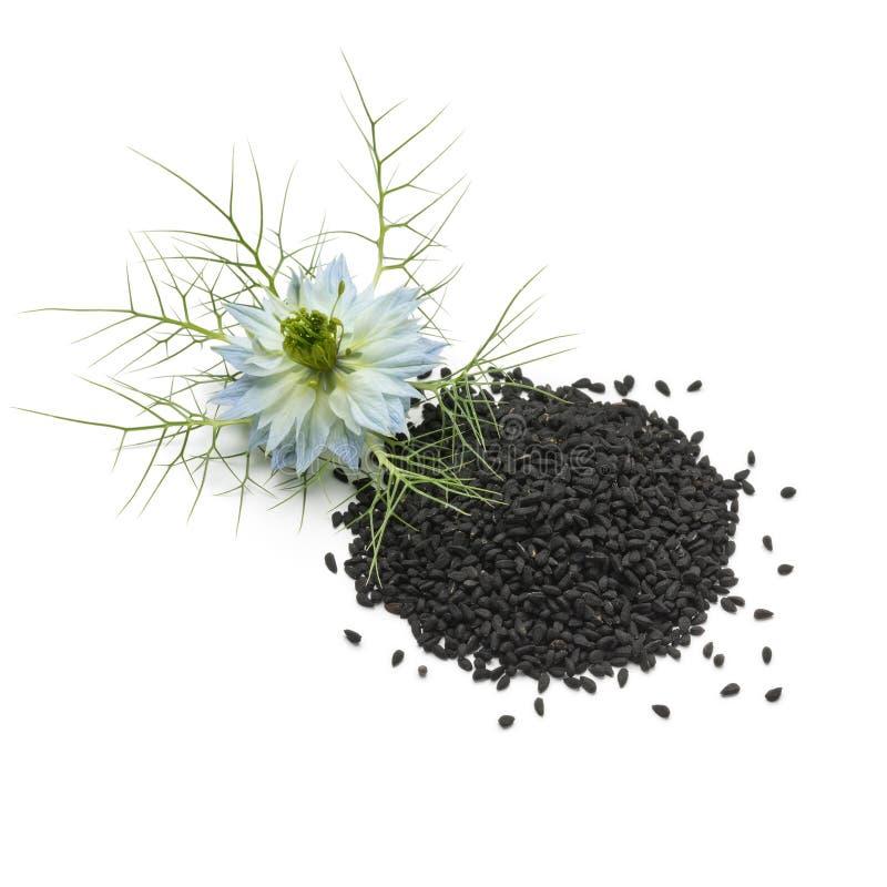 Rozsypisko czarny nigella kwiat i ziarna zdjęcie royalty free