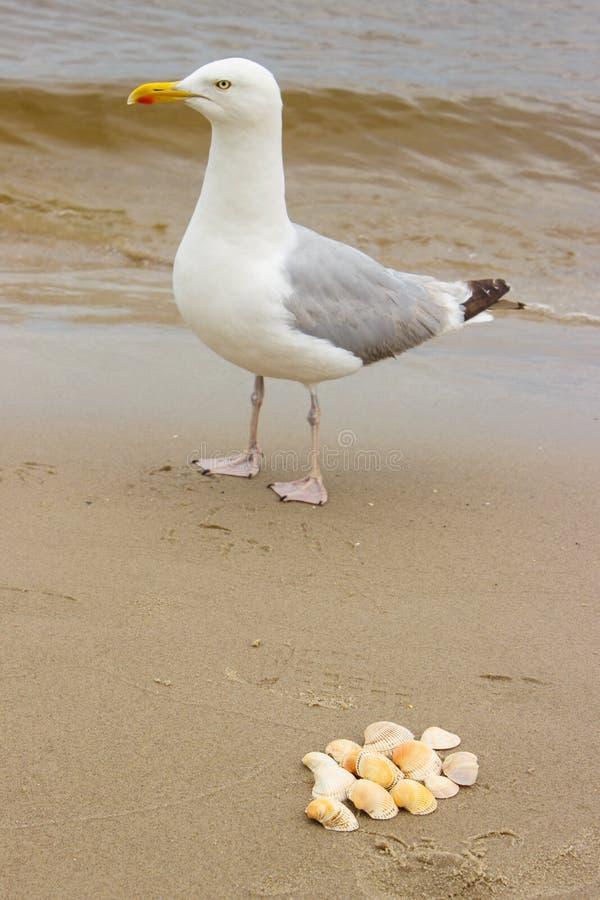 Rozsypisko seashells i seagull przy plażą morzem obraz royalty free